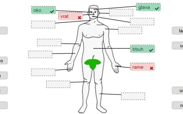 Dijelovi tijela